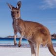Informowaliśmy, że w kalendarzu imprez pojawił się nowy turniej darta- Sydney Darts Masters. W dniach 29-31.08.2013 o nietypowej (inna strefa czasowa) godzinie 12:00 rozpoczną się rozgrywki, w trakcie których zobaczymy […]